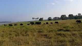 preview picture of video 'Liwonde National Park Elephants, on safari with Mvuu wilderness lodge.'