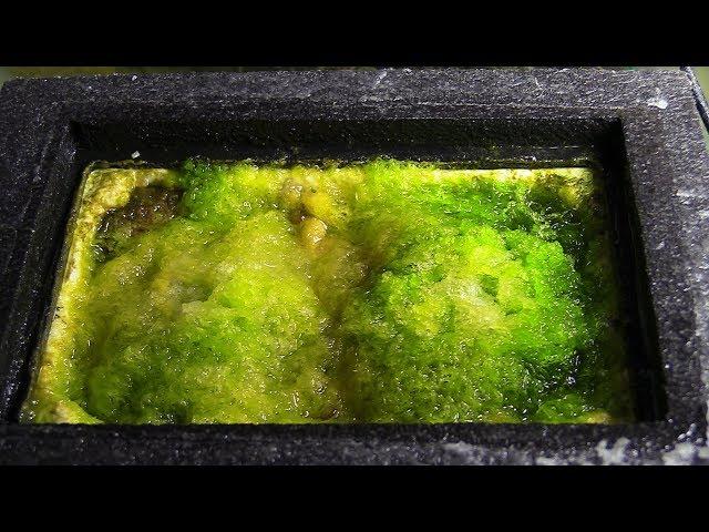 DO ALGAE TURF SCUBBERS WORK?! | 180G REEF TANK SALTWATER  REEF FILTRATION
