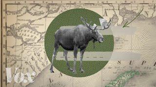 What's killing Minnesota's moose?
