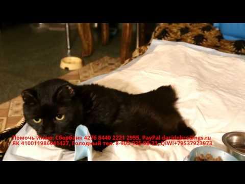 Кот без лап | Нужна ваша помощь | Обморожение конечностей у кота | the animals need your help