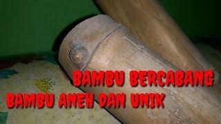 BAMBU ANEH, UNIK, & LANGKA || BARANG ANTIK