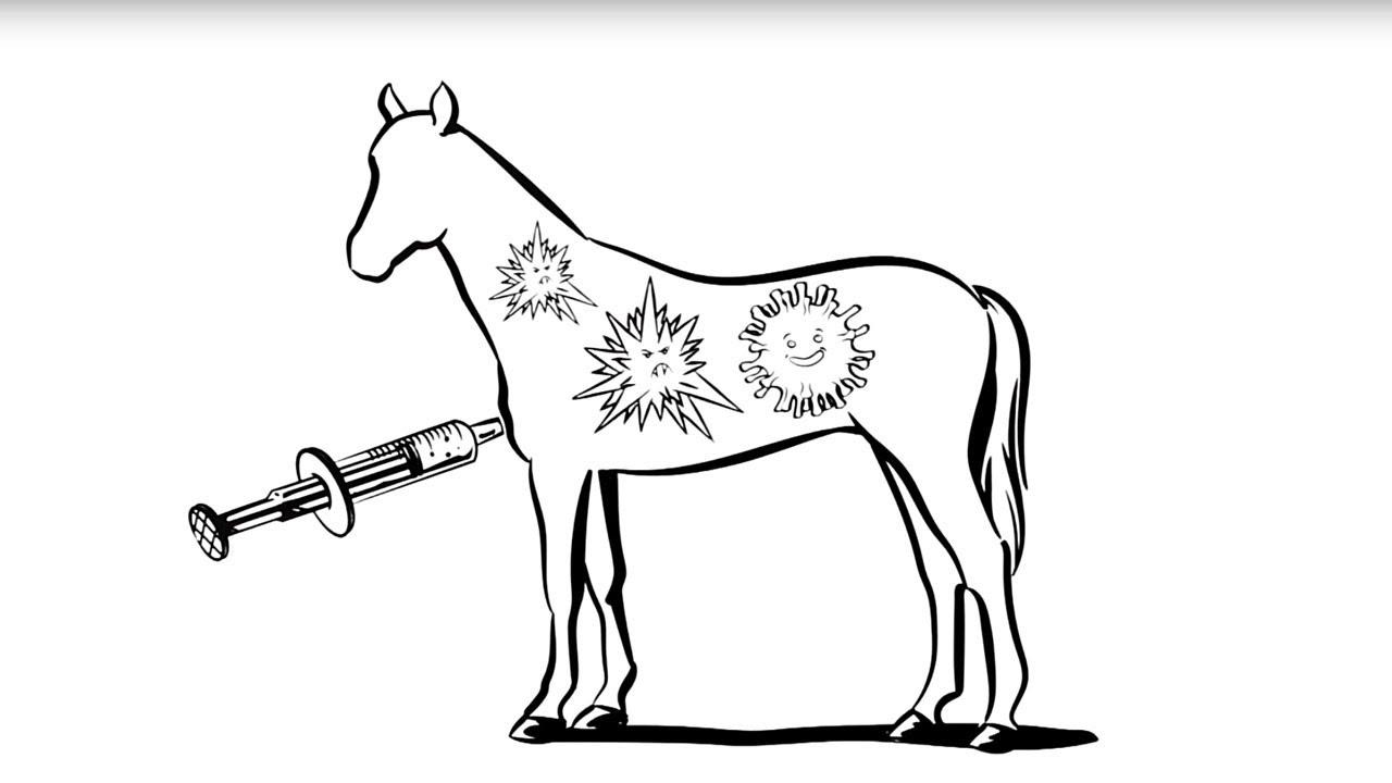 Video: Pferde impfen – einfach erklärt