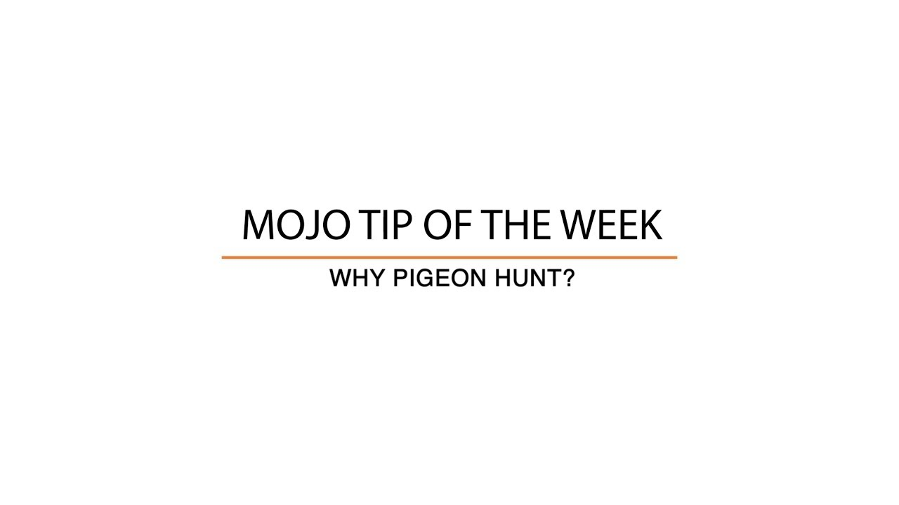 Pigeon Hunting Tips with MOJO