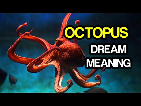 Octopus dream meaning and dream interpretation