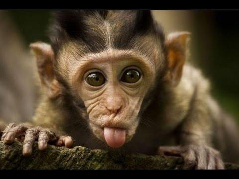 Maymunların En Komik ve En İlginç Anları