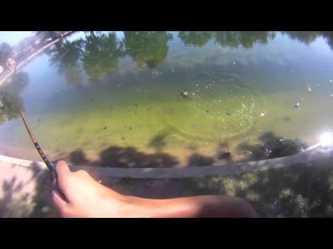 Simi valley Duck Pond Bass Fishing