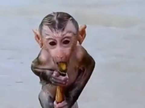 Смешные приколы с обезьянками.