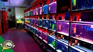 How Aquarium Co-Op was Built - The Tour.
