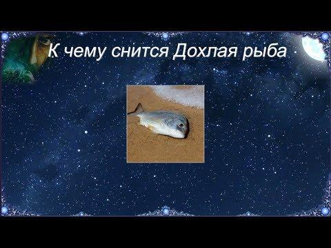 К чему снится Дохлая рыба (Сонник)