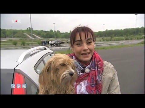 Der DoggySafe bei hundkatzemaus.