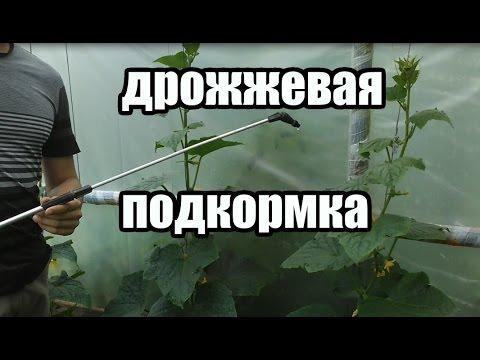 Удобрение для томатов, огурцов, и других овощей. Подкормка на основе дрожжей.