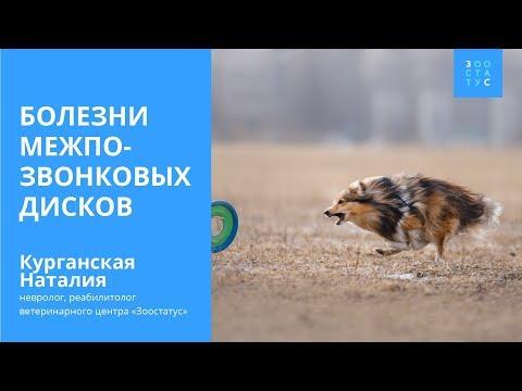 ДИСКОПАТИЯ У СОБАК (у собаки отказали лапы)