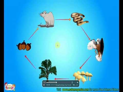 السلسلة الغذائية