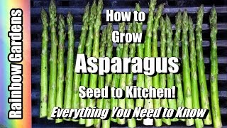 How to Grow Asparagus 101, Seed to Kitchen, Everything You Want to Know, Problems, Planting, More