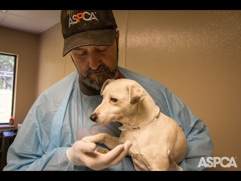 Traumatized Puppy Mill Dog Makes an Amazing Recovery