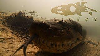 nuota-con-un-anaconda-gigante-il-video-da-brividi