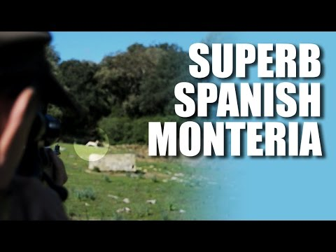 Superb Spanish Montería