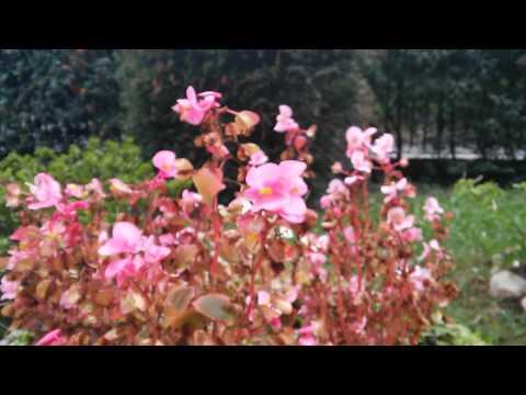 Test video Full HD 1080p 30fps LG G3S (G3 Mini)