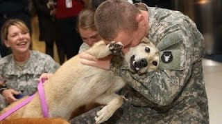 Как Собаки Встречают Своих Хозяев Солдат.  Подборка [HD]