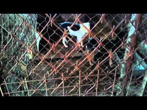 Hunedoara-Adăpost câini Hunedoara/ianuarie 2016