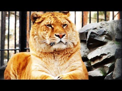 Гороскоп для льва на 2016 год декабрь