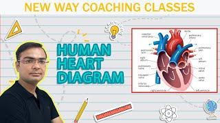 Descargar Mp3 De Heart Diagram Class 10 Gratis Buentema Org