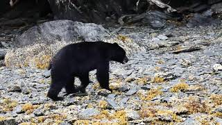 "Alaska Island Adventures - Nothing but the ""Bear"" Facts"