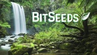 BitSeeds 2.0  - How to Encrypt Your BitSeeds Wallet & Protect the Cryptocurrency Inside