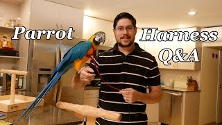 Q&A about Aviator Harness for Parrots