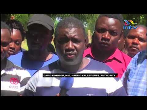 Fruit flies menace for many mango farmers in Elgeyo Marakwet