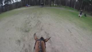 Martine Veenendaal met Fay | L-Paarden
