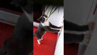Смешные приколы с котами