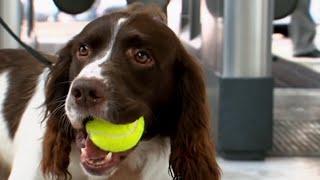 Send In The Dogs - Season 2, Episode 1