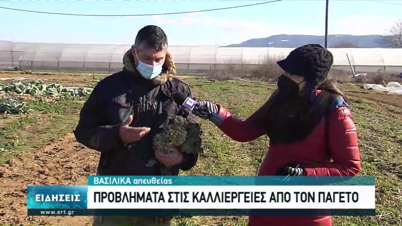 """Στήριξη ζητούν οι αγρότες που χτυπήθηκαν από τη """"Μήδεια""""    16/02/2021   ΕΡΤ"""