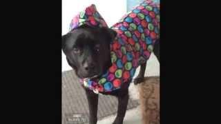 Domino - raincoat