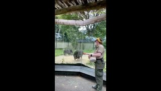 Zoo to You: Perfect peccary boys