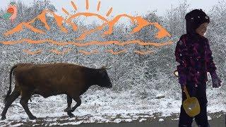 Ариана, снежный ангел и встреча отряда коров.