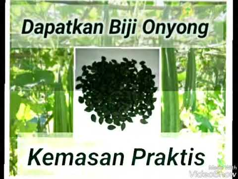 Video Mengenal Tanaman Onyong / gambas (Biji Onyong)