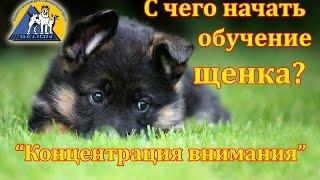 Смотреть онлайн Урок дрессировки щенка в домашних условиях
