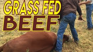 Grass Fed Beef Slaughter