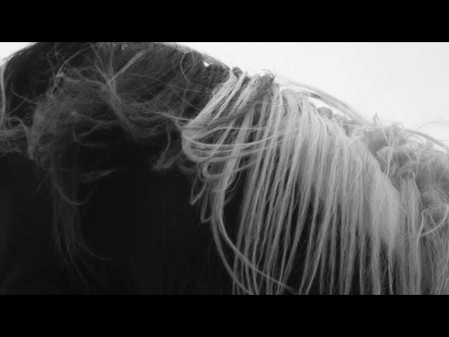 Prodigal Dog - Hilary Woods