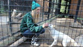 Животные и люди. Зоопарк Роев ручей