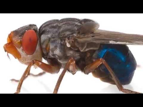 Les parasites les plus simples sporoviki