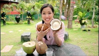 Cómo se produce la leche de coco en Tailandia