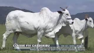 Classe fiv casseribu