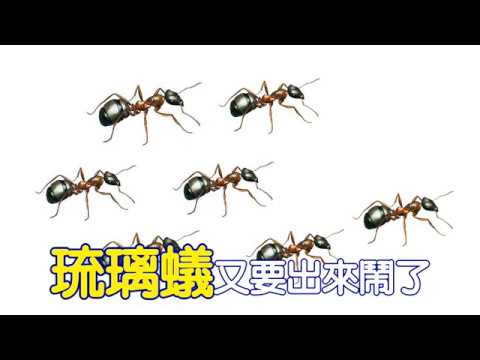 掛燈滅琉璃蟻宣傳片 閩南語