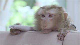 เปิดโปง ความลับของน้องลิง