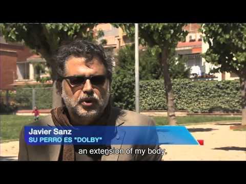 Erfahrungsbericht Hyaloral für Hunde - Studie TV spanischer Blindenhundverband