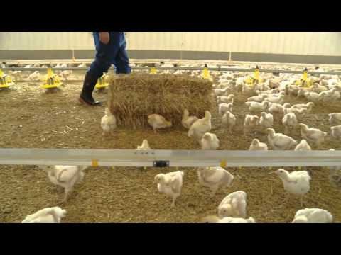 Meet the Chicken Farmer - Nick Bragg