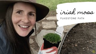 I Got More Plants! Planting Irish Moss in Flagstone Path | Home for the Harvest